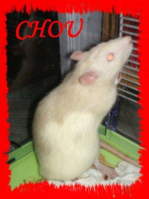 R.I.P. Chou (2)