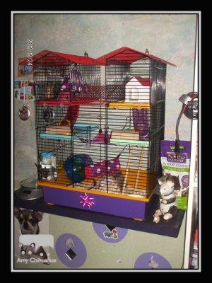 Cage de Namy & Evolution de Birdy