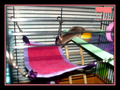 Namy au 1er étage & évolution de Birdy