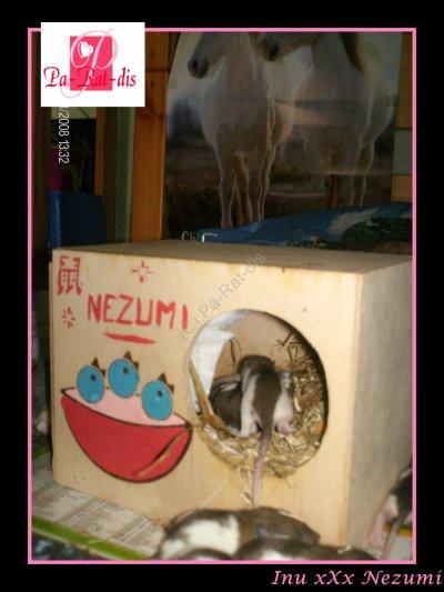Nostalgie : Inu xXx Nezumi (2)