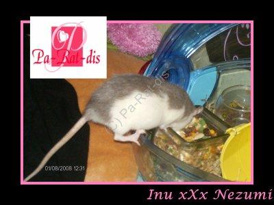 Nostalgie : Inu xXx Nezumi (3)