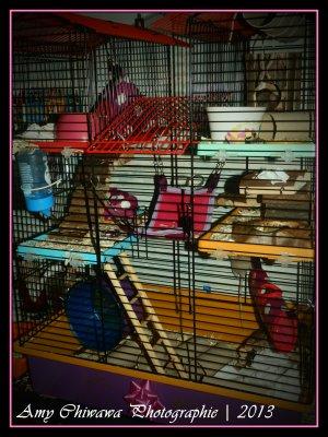 La cage des souris