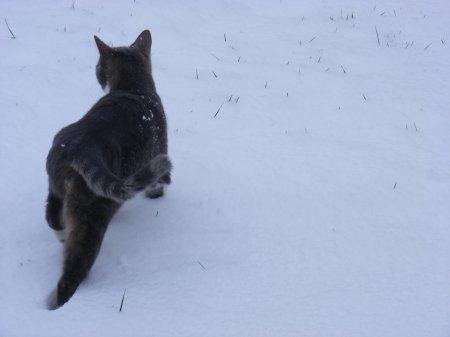 Parce que c'est la deuxieme fois que tu ressens la neige sous tes petits coussinets!