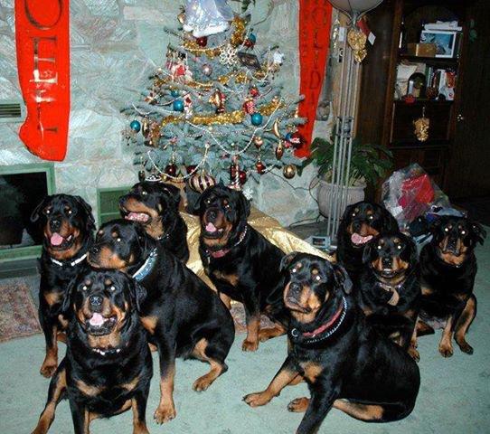 Voici ma belle familles de chez moi mes gardien bisous à vous tous !!!!!!