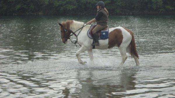 j aime beaucoups ce petit cheval
