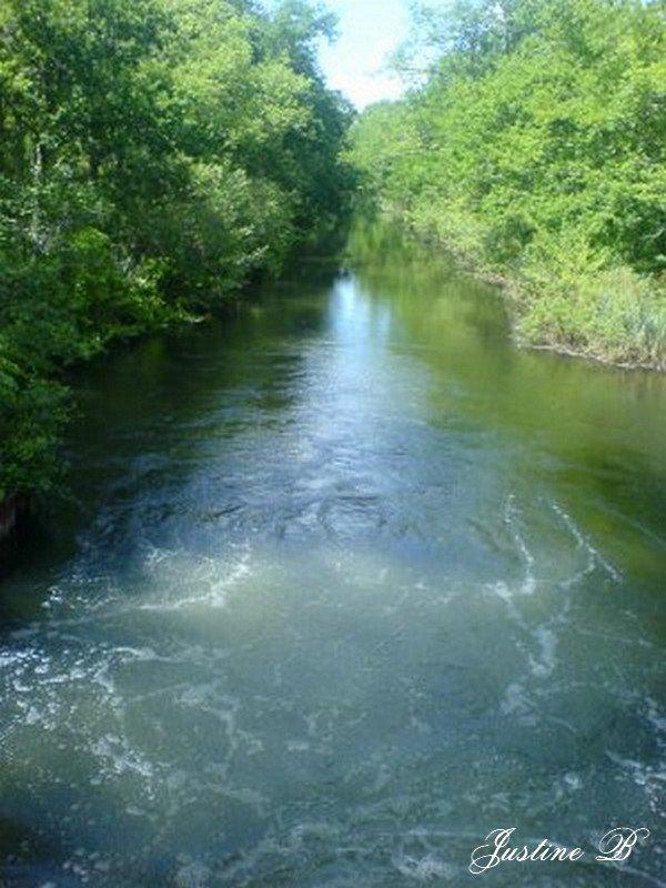 Le fleuve de la Chêneraie .