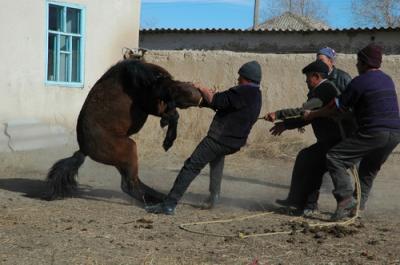 Quand les animaux se rebelle sauvons ensemble les animaux - Cheval rebelle ...