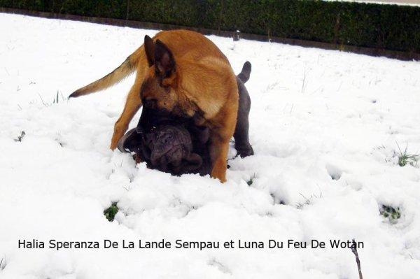Halia Speranza et Luna.......
