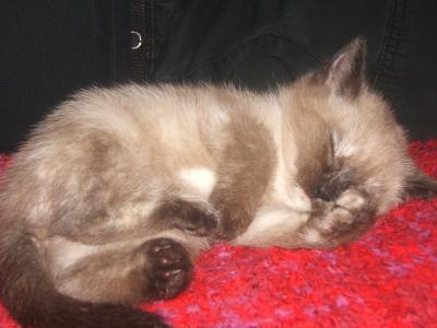 Mon chat: Gribouille