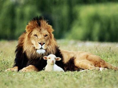 Info: Le comportement animal