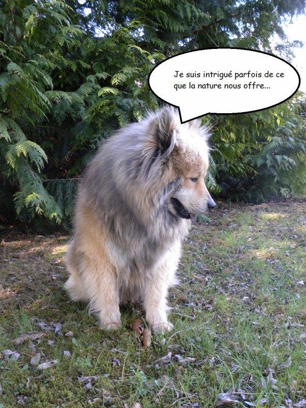 Sinon Inouk est toujours un chien très curieux