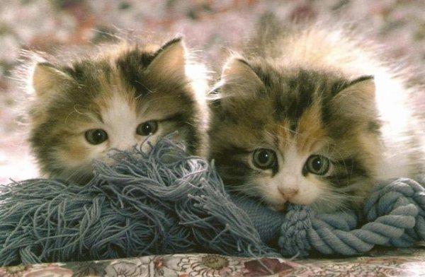 ♥Mes autres blogs sont dans mes amis♥ chat