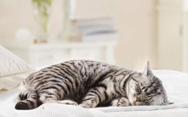 Les plus belles images de chats