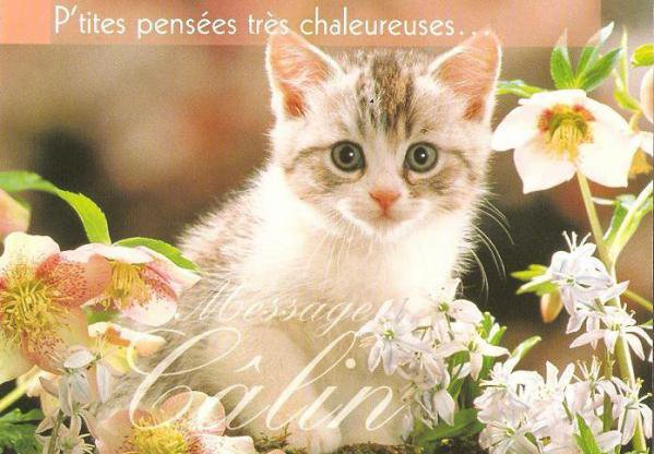 Chaton, Chat, Alexischaton ^^