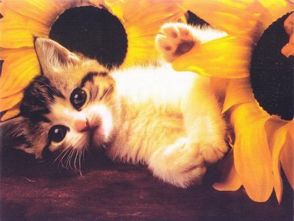 Les plus belles images de chatons