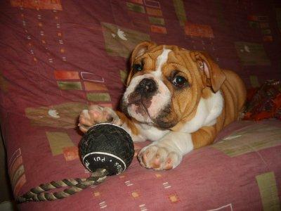 Touche pas a mon jouet