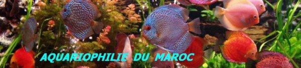 aquariumouad