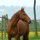 Photo de One-life-at-horse