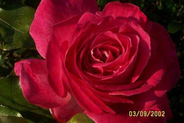 superbes ces fleurs