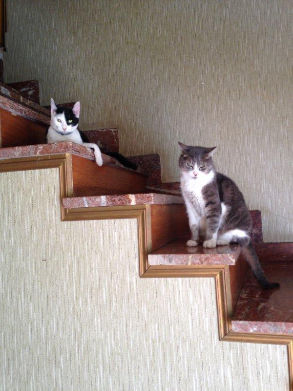 belles mes chattes