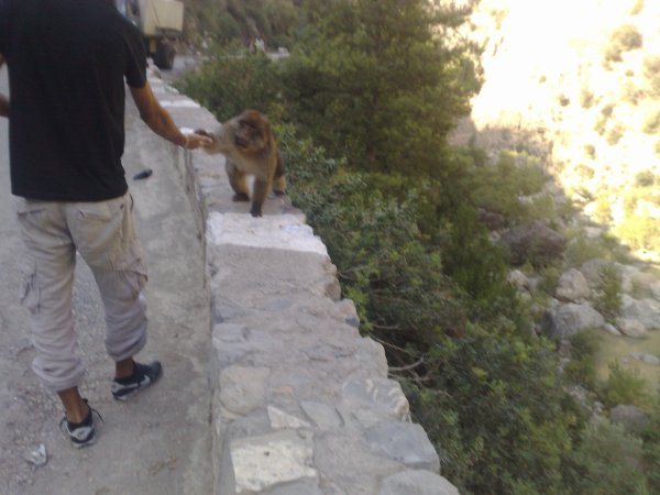 avec  singes