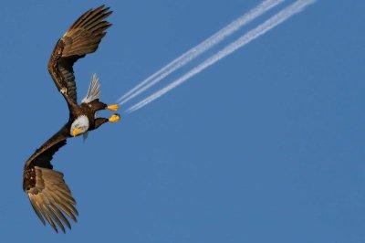 Attention freinage ! Un aigle supersonique,croix moi ç vrai!!!!!!!!!!!!!!