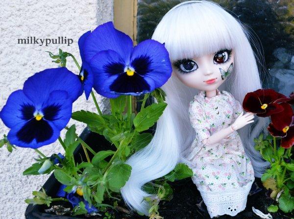 Yurei et Choco dans le jardin de mes grands-parents partie 2 ^^ :3