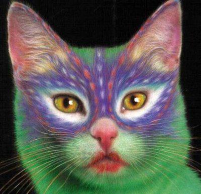 Drole de chat mais super chez capucine - Photo super drole ...