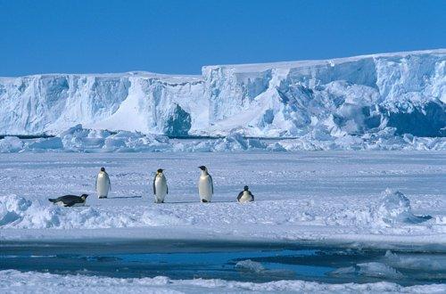 Mes voisins les pingouins