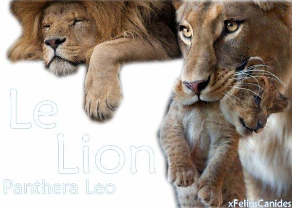 Le lion~