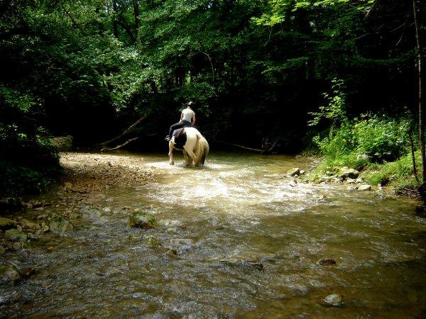 Skippy enfin dans l'eau !
