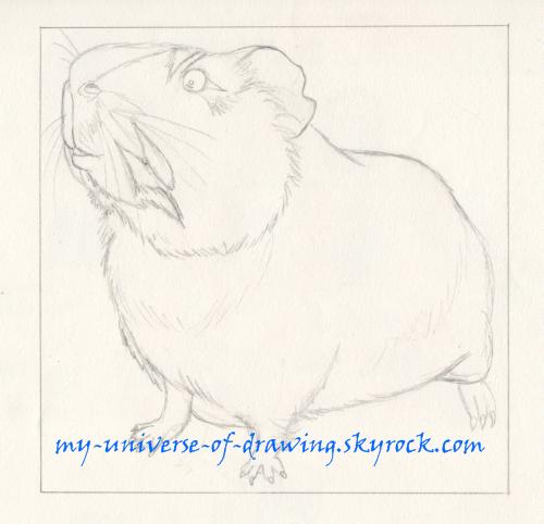 Rapido, mon cochon cochon d'inde (bin oué ça s'voit quoi !)