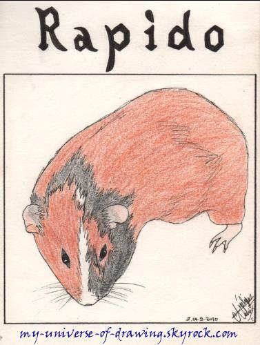 Rapido (2éme dessin)