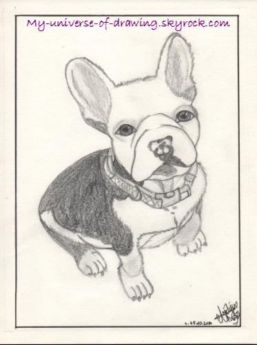 Stitch ( le bouledogue français de ma cop' Aline, il porte bien son nom avc ses grandes oreilles ! )