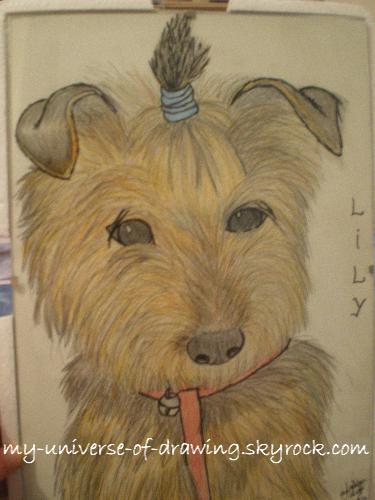 Portrait de Lily