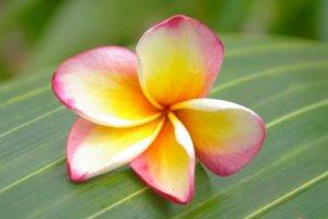 Fleur De Monoi Parce Que L Inspiration N Attend Pas