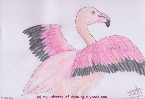 Oiseaux 02