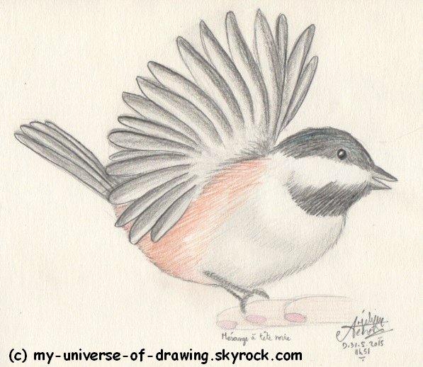 Oiseaux des Jardins