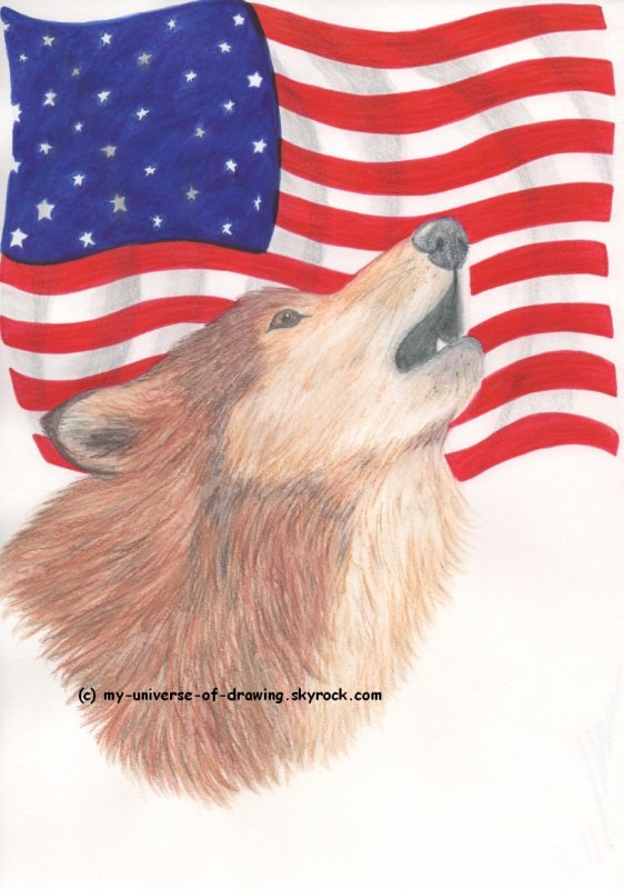 Un Loup en Amérique