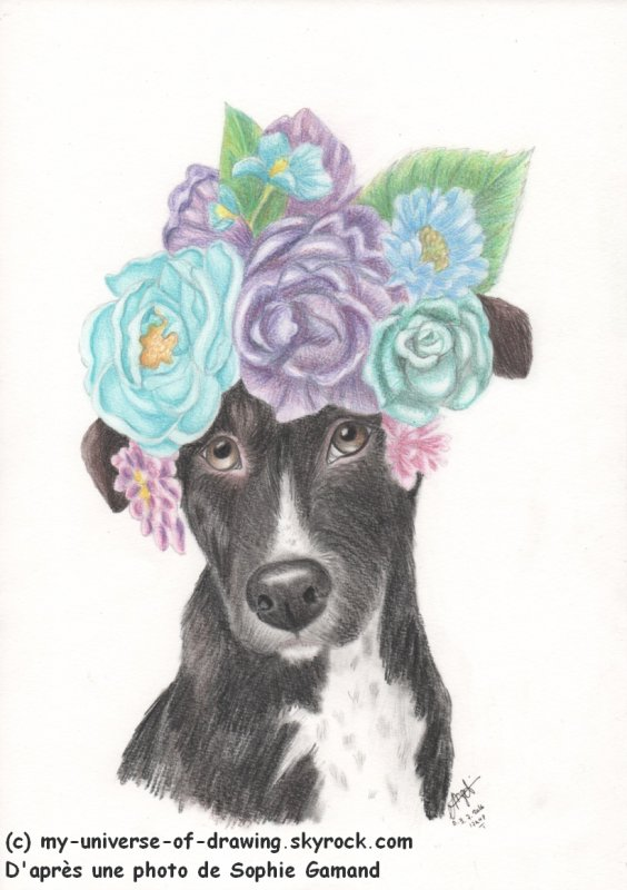 Pitbull en Fleurs