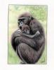 Gorille et son petit