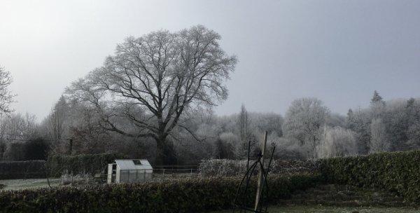 le gel sur les arbres