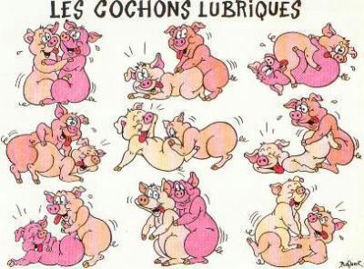Roooo les cochons ....