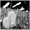 xBurst-Love