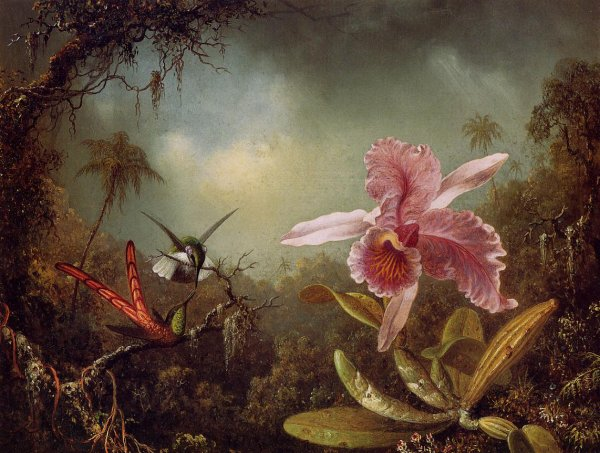 Bon dimanche  !    :  Martin Johnson Heade , peintre américain (1819-1904)  :  orchidée et deux colibris (1871)