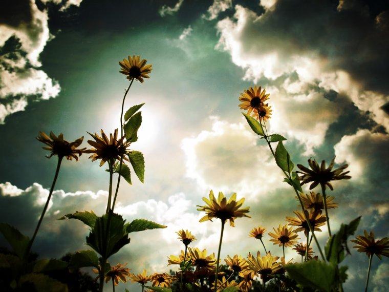 """Fleur de saison  via """"explorer, découvrir, partager """""""