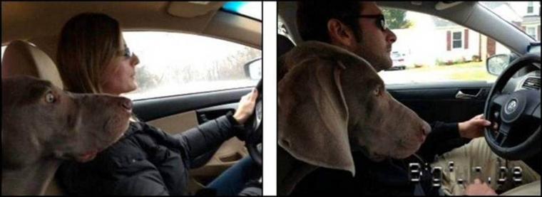 Différence de conduite entre un homme et une femme... Je ne ferai aucun commentaire , tout est dans le regard du chien...
