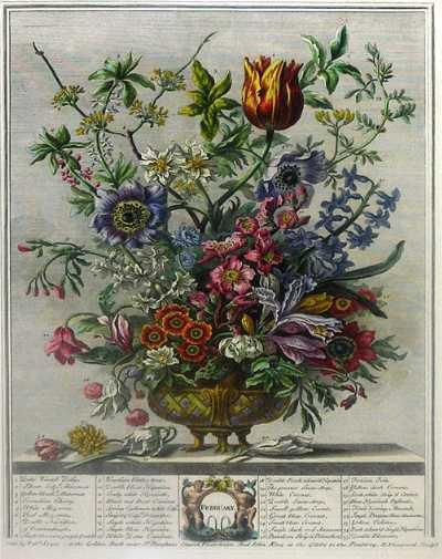 Robert FURBER  (1674-1756)   :   calendrier de graines de fleurs  ,  janvier / février