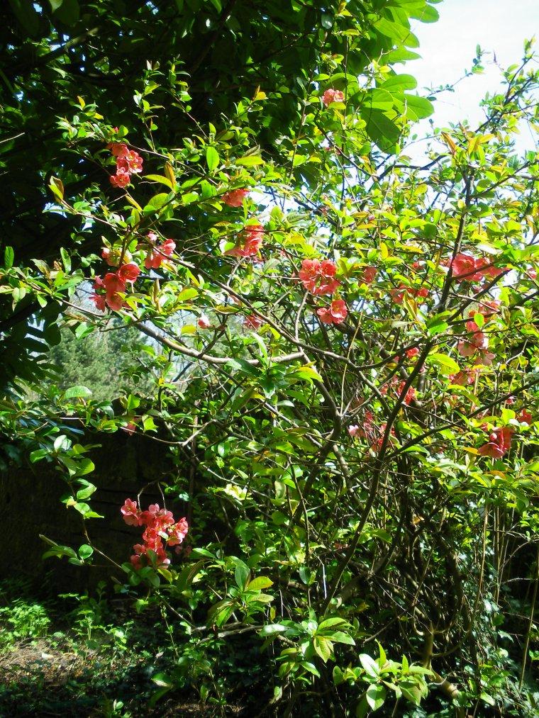 Le jardin d' Eden ( = mon bouledogue   :-)  )