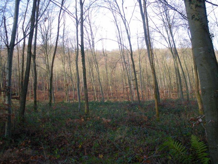La Forêt de Compiègne , vers Trosly
